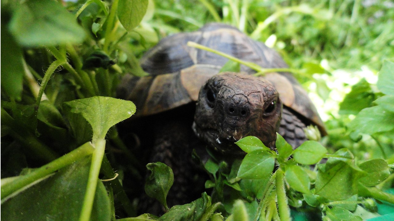 Research institutes page – picture of a young Greek tortoise